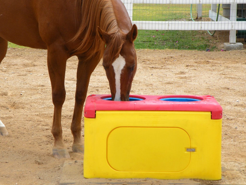 insulated heated waterer automatic for horses